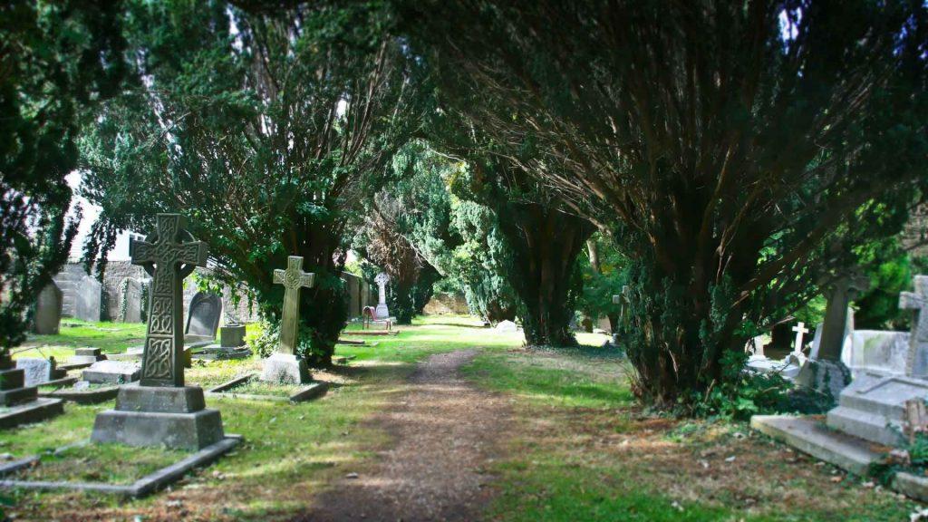 https://www.rectorylanecemetery.org.uk/wp-content/uploads/2018/10/yew-trees-avenue-1024x576.jpg