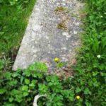 Burge plot