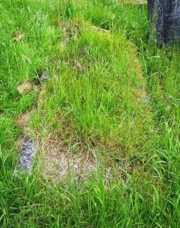 Delderfield plot