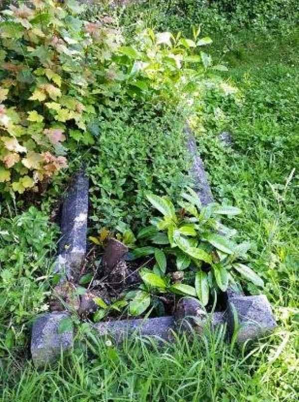 Green plot