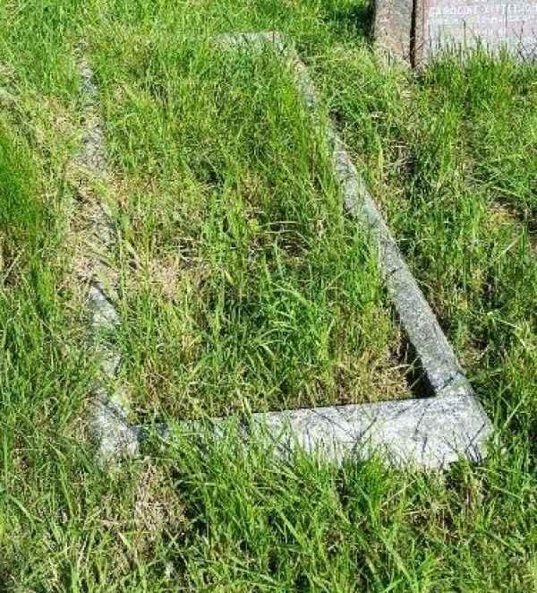 Saltmarsh plot
